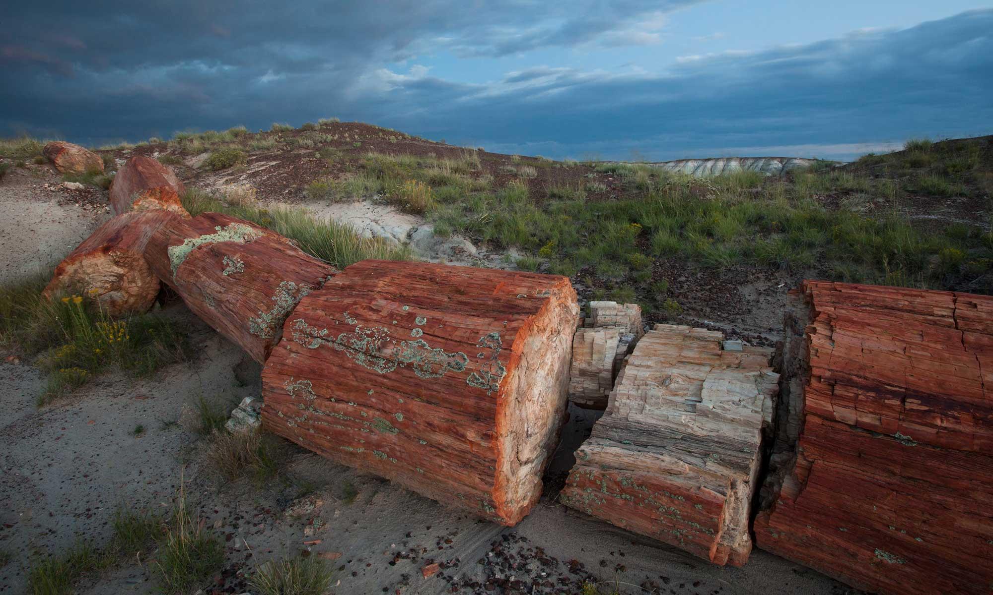 Petrified logs lying on the ground | Photo courtesy of Larry Lindahl